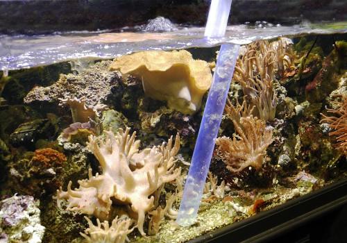 Aquarium cleaning service uk