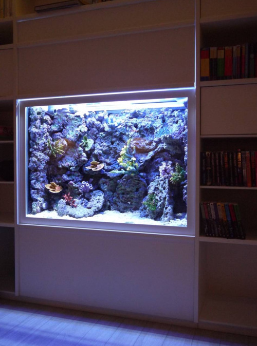 Built in wall aquarium with artificial rock background and corals. We can  supply any size of artificial rock plates to fit a bespoke fish tank.