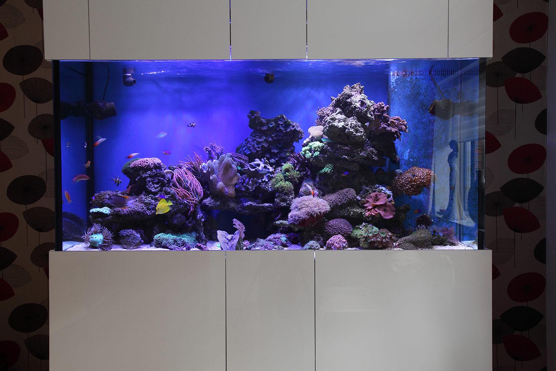 Reef Aquarium In Greater Manchester Oceanlife Aquatics