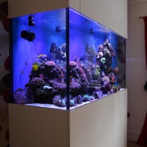 Built in wall fish tank uk