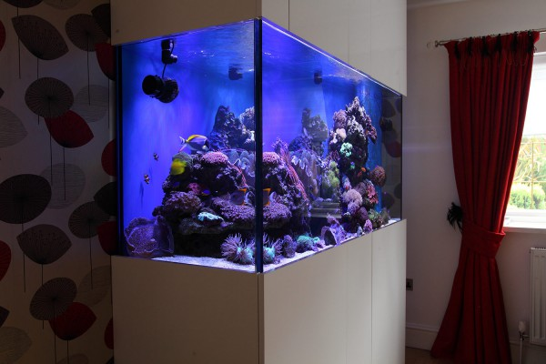 Built in wall fish tank uk