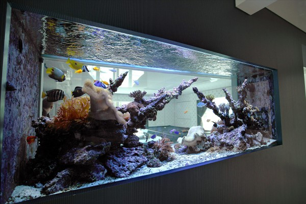 Benefits Of A Built In Wall Aquarium Oceanlife Aquatics