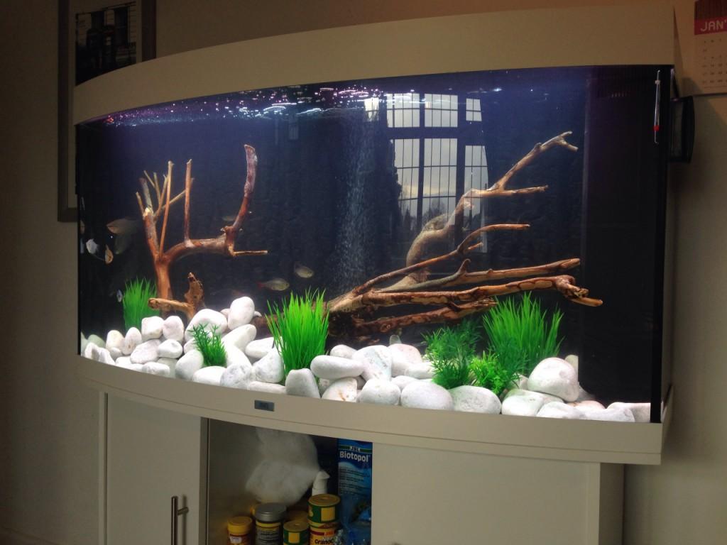 Aquarium overhaul