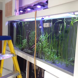 Aquarium cleaning & fish tank maintenance service