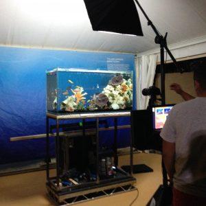 Short term fish tank hire