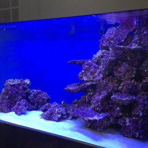 Marine fish tank builder