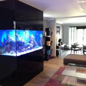 Built in wall fish tank