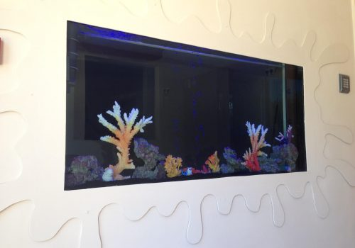 In wall fish tank