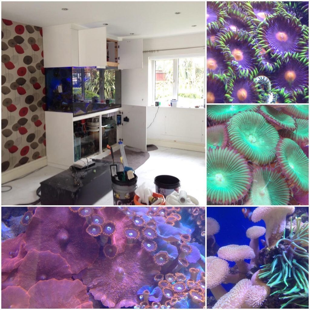 Fish tank cleaning service in Manchester