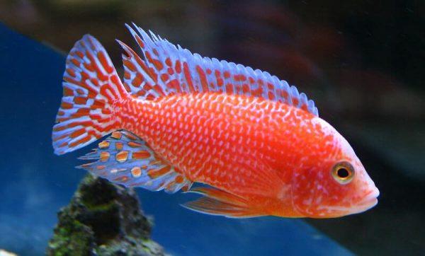 fish tank hire