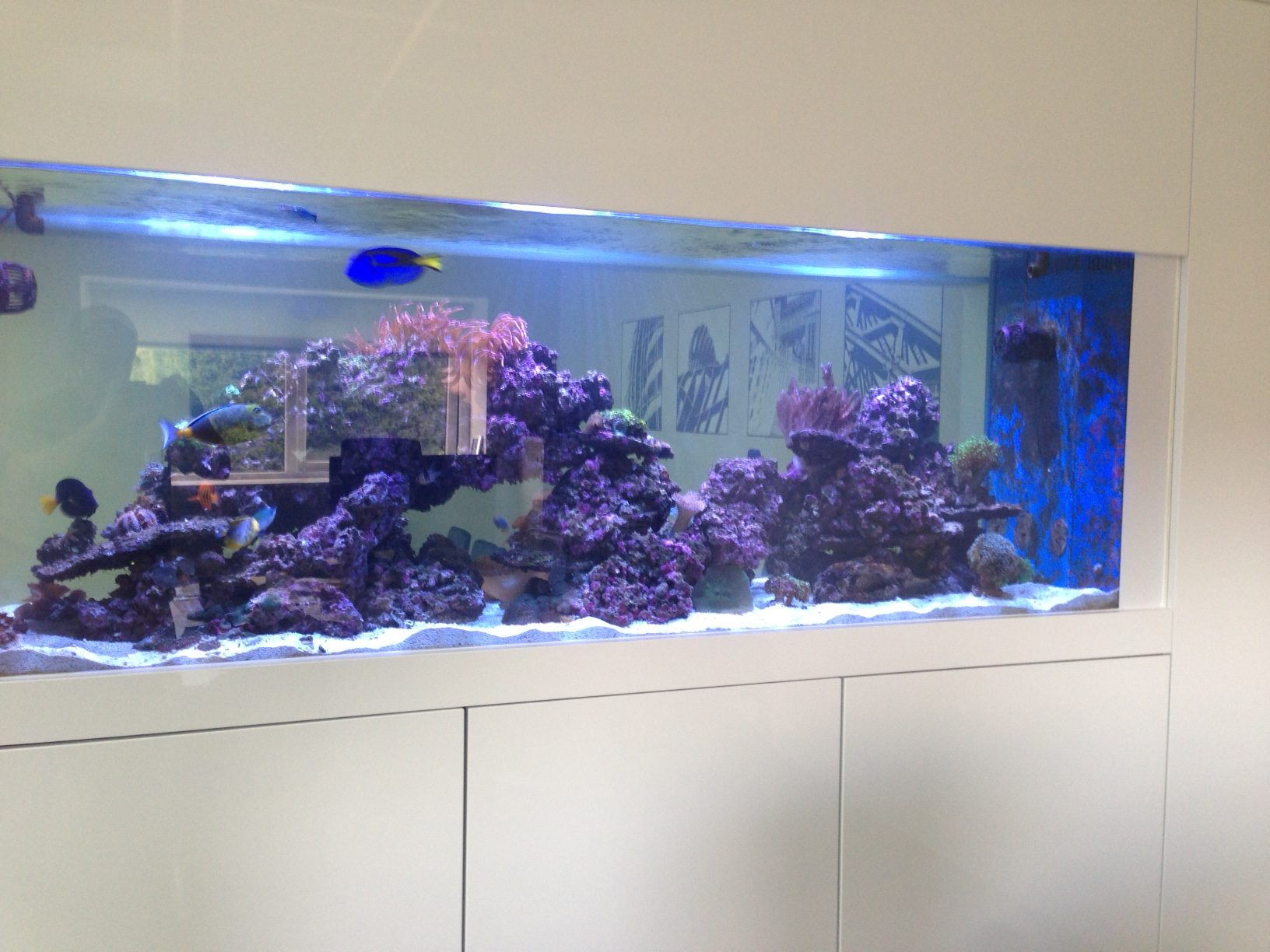 Custom wall aquarium in newcastle oceanlife aquatics for Built in fish tank