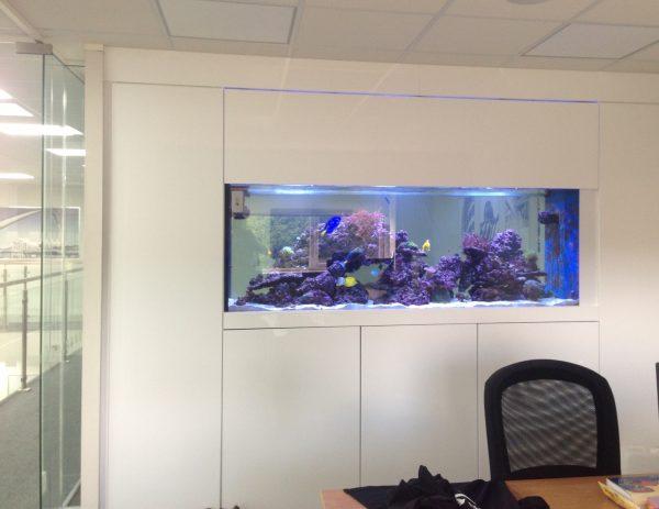 custom wall aquarium