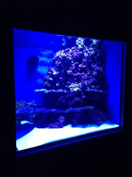 New in wall fish tank