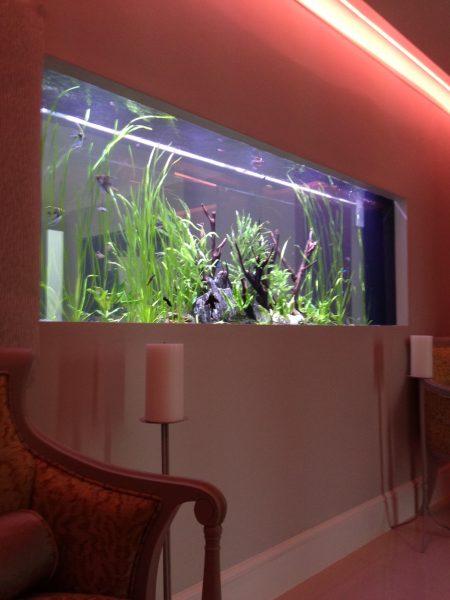 Wall aquarium builder
