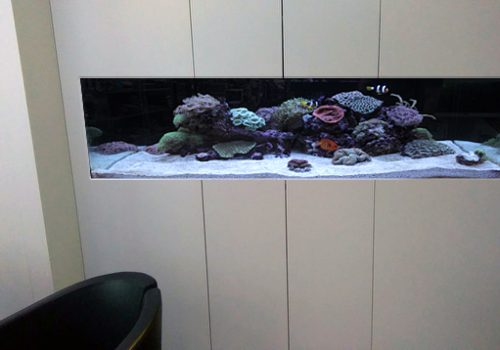 Aquarium design mock up service