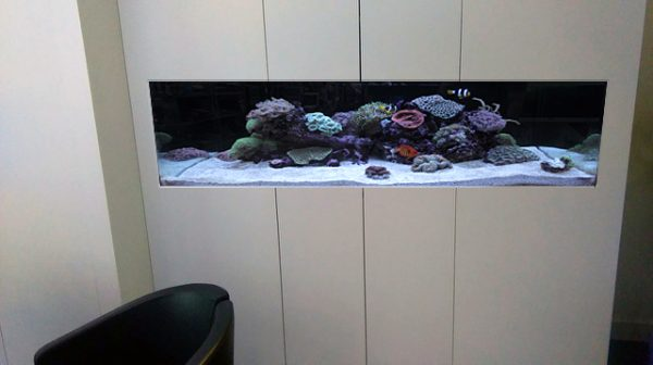 Fish tank mock up