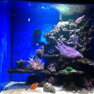 Through wall fish tank