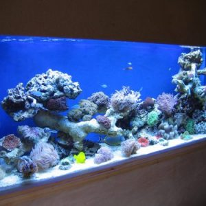 Aquarium installer uk