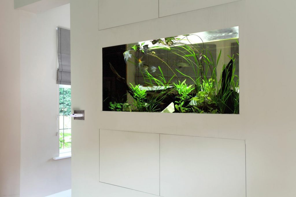 Built in wall aquarium