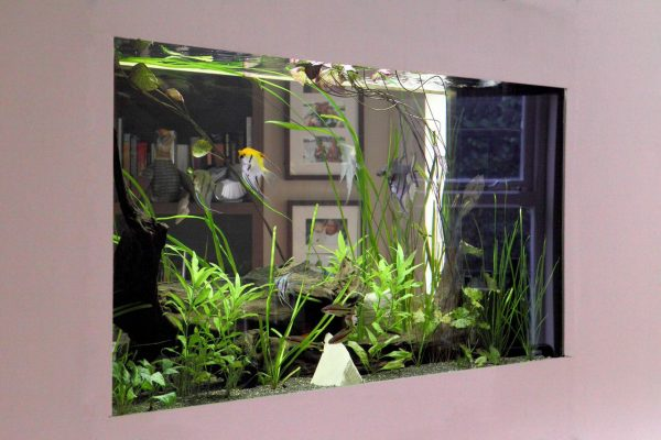 Through wall aquarium