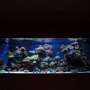Custom marine aquarium uk