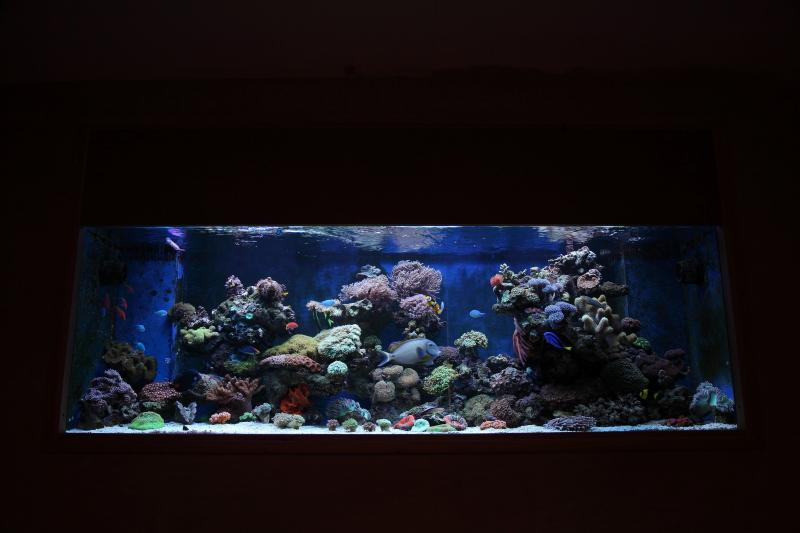 Custom marine aquarium uk