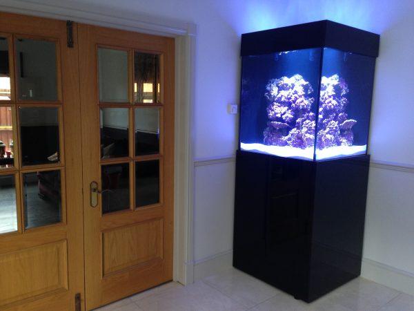 Bespoke aquarium build in derbyshire