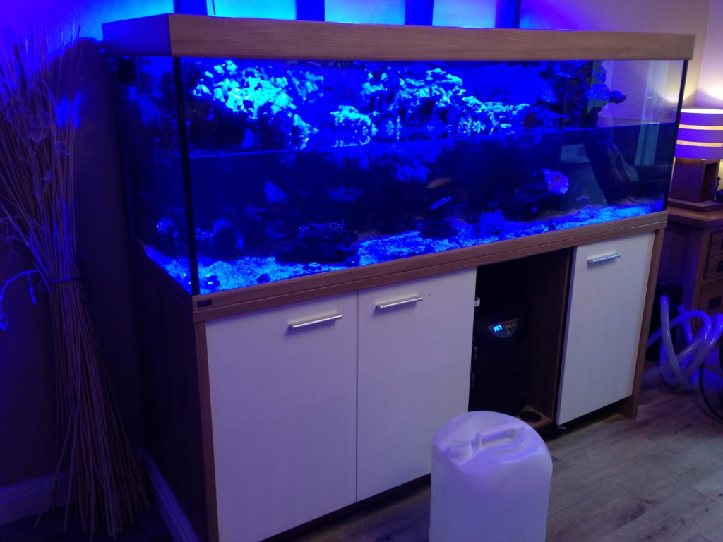 Fish tank cleaning service