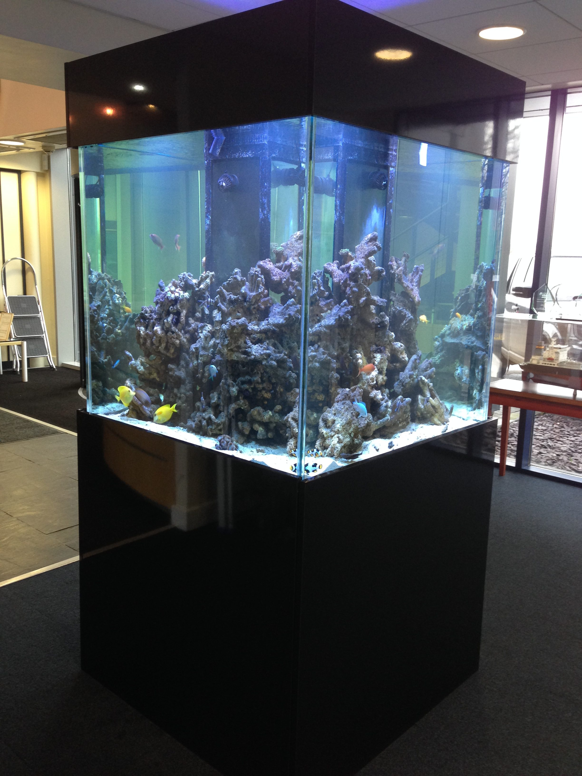 Aquarium maintenance service in derbyshire for Fish tank cleaning