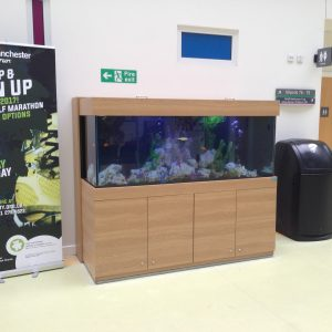 Aquarium services provider