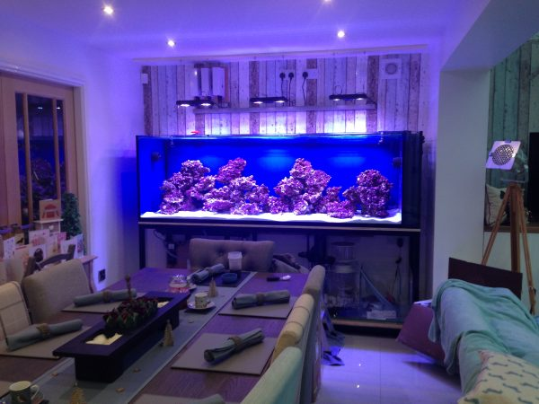 Custom fish tank builder