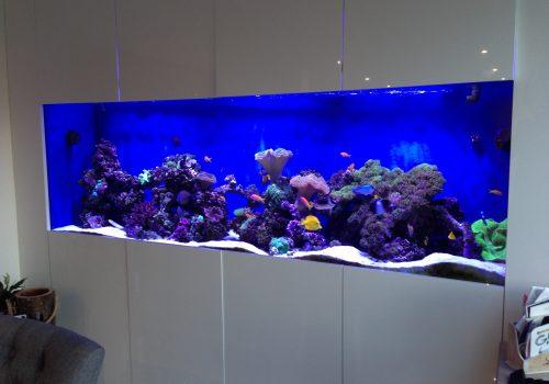 Bespoke aquarium design