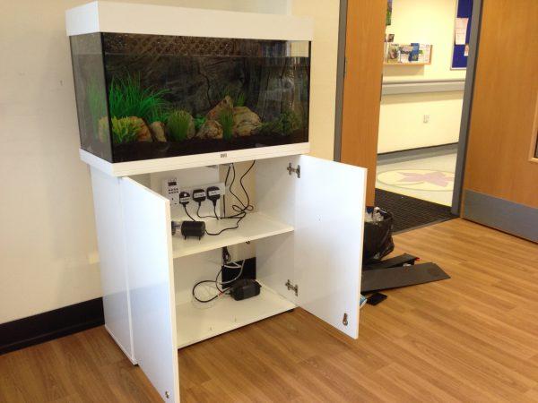 Fish tank hire service