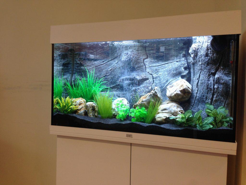 Derby hospital aquariums