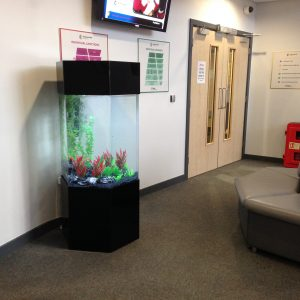 Leeds Fish tank rental