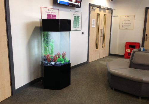 Aquarium rental in leeds