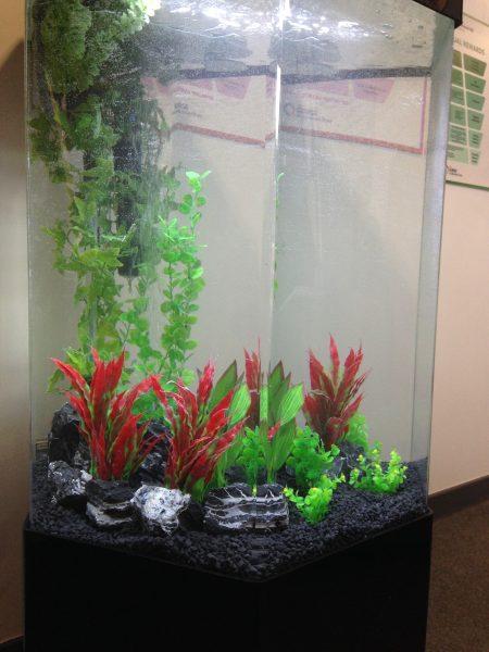Aquarium hire service