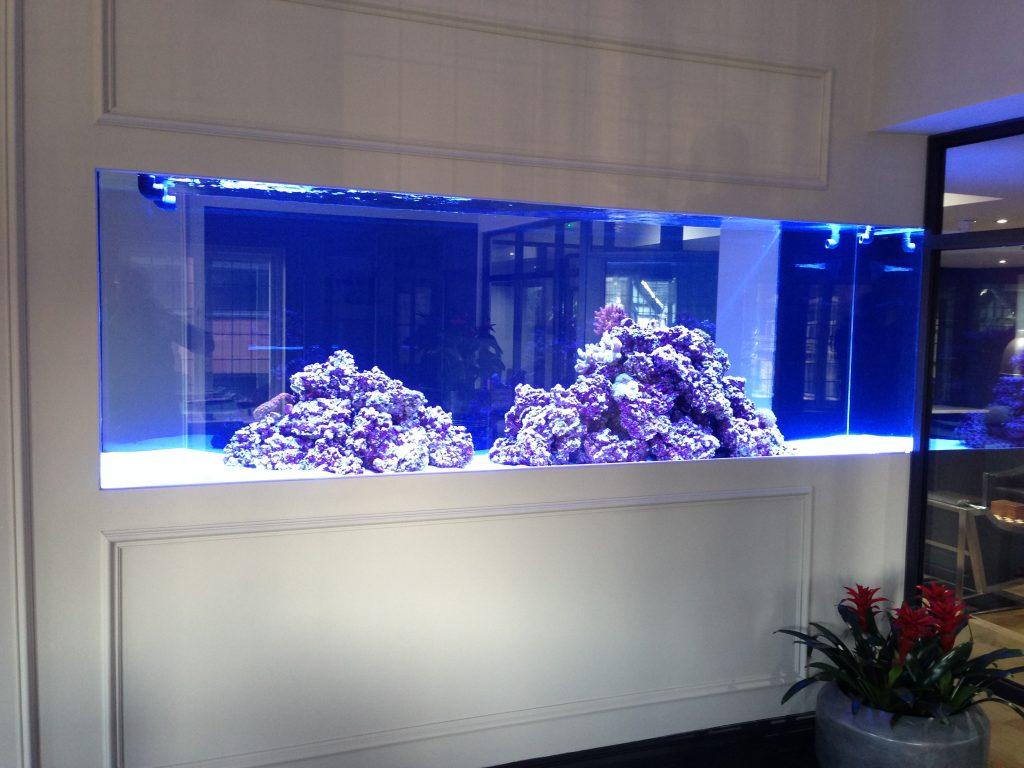 Choosing The Perfect Aquarium Design For Your Home