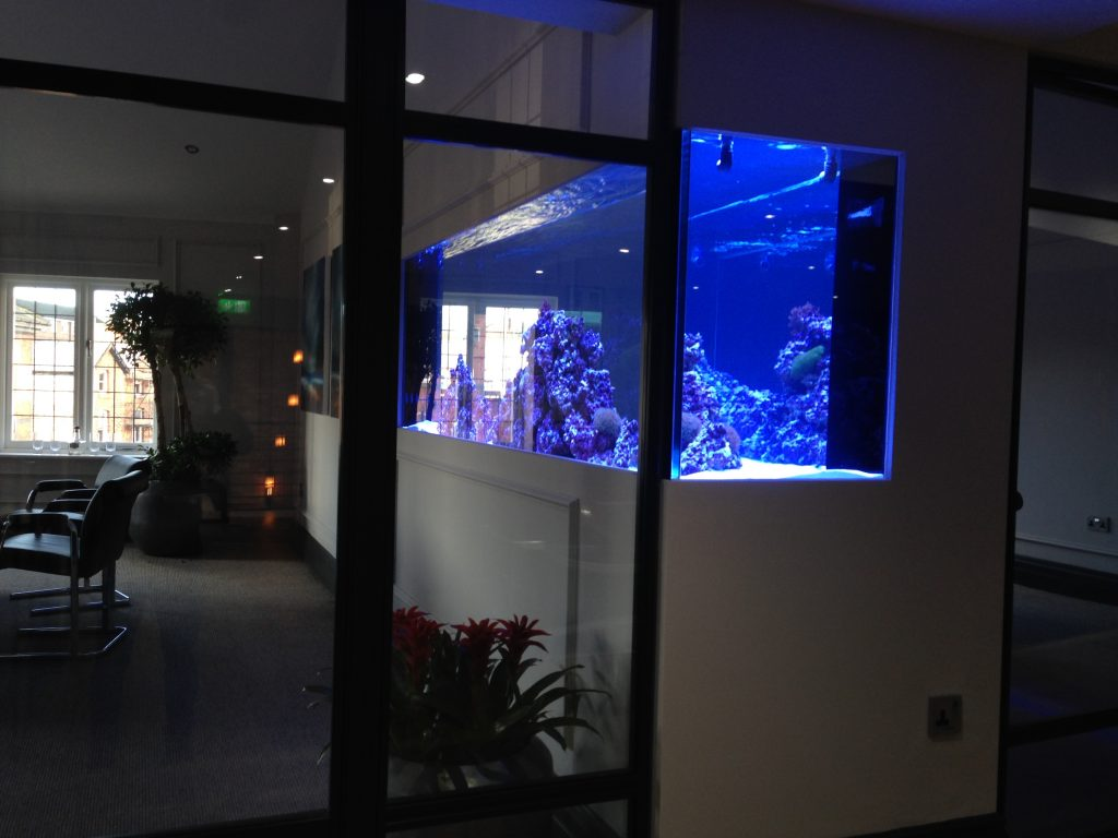 Office in wall reef aquarium
