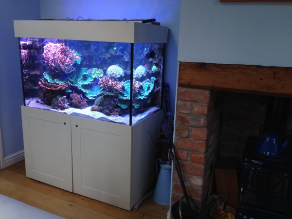 Saltwater fish tank supplier