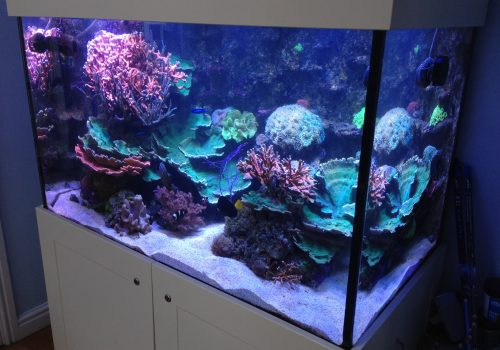 Saltwater coral fish tank in Cheshire