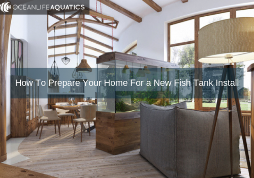 How To Prepare Your Home For a New Fish Tank Install