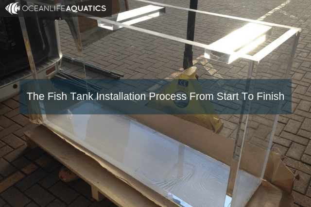 The Fish Tank Installation Process From Start To Finish