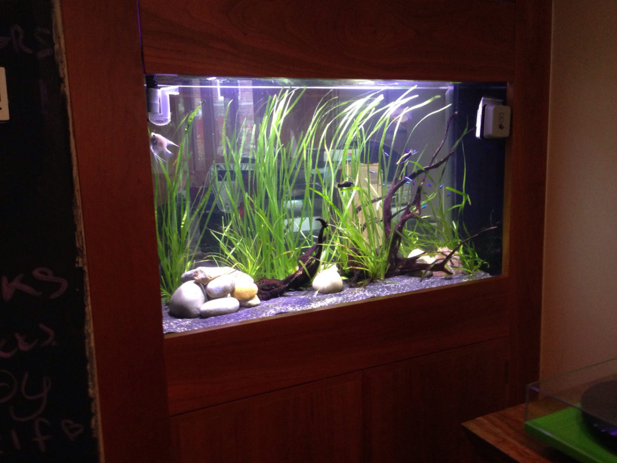Aquarium maintenance in Newcastle