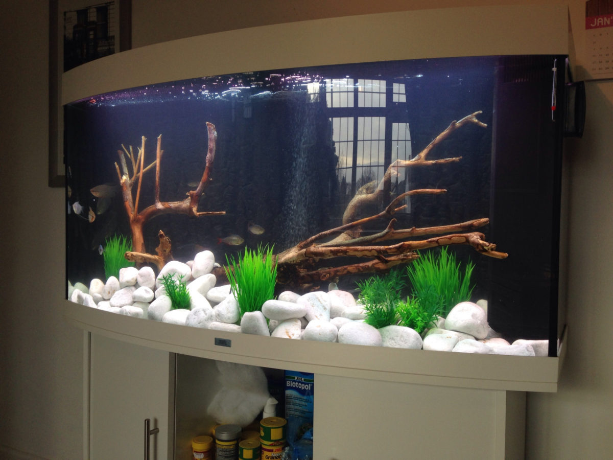 Aquarium Overhaul