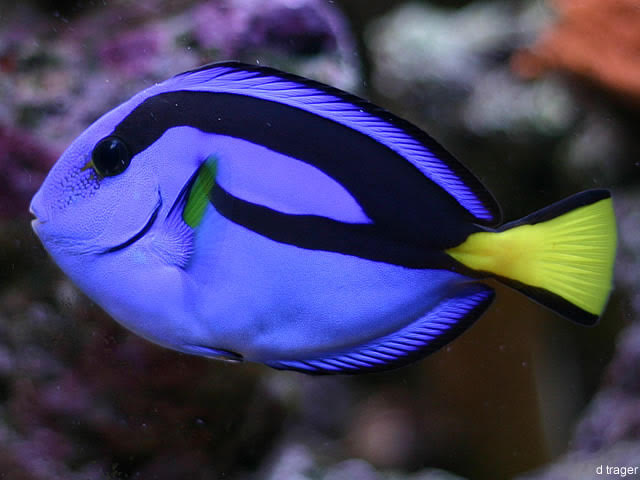 Dory Captive Bred For First Time