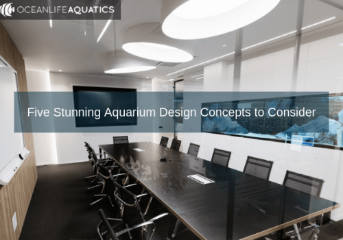 Five Stunning Aquarium Design Concepts to Consider