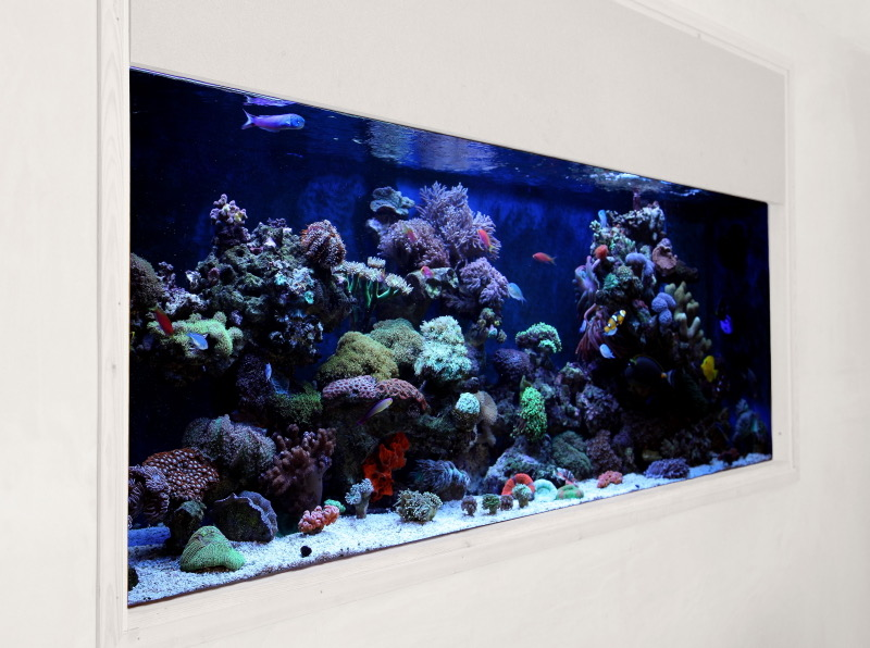 Building an in Wall Reef Aquarium