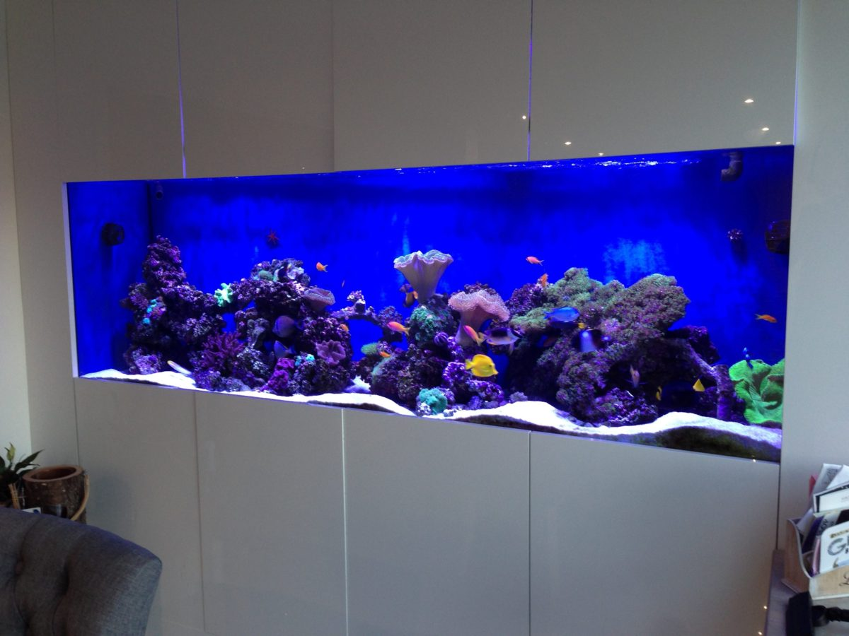 Wall Reef Aquarium Update