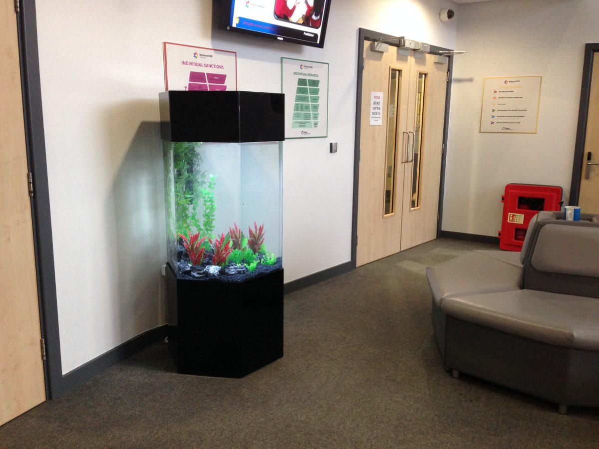 Leeds Fish Tank Rental